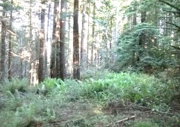 Purchase of Timberland in Humboldt County